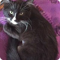 Adopt A Pet :: Sissy - Encinitas, CA