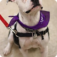 Adopt A Pet :: Petey**FOSTER NEEDED** - Christiana, TN