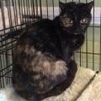 Adopt A Pet :: Candie - Breinigsville, PA