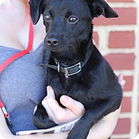 Adopt A Pet :: Derek *adoption pending* - Manassas, VA