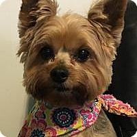 Adopt A Pet :: Mitzi - Princeton, KY