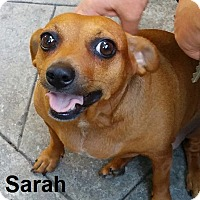 Adopt A Pet :: Sarah - Lake Forest, CA