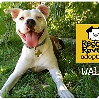 Adopt A Pet :: Waldo - Salt Lake City, UT