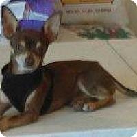 Adopt A Pet :: BW - Tonopah, AZ