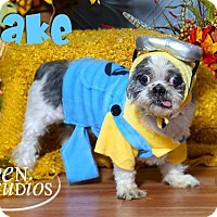 Adopt A Pet :: Blake - Valparaiso, IN