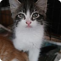 Adopt A Pet :: ORPHAN 3 - San Pablo, CA