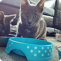 Adopt A Pet :: Charlie-Adoption Pending! - Colmar, PA