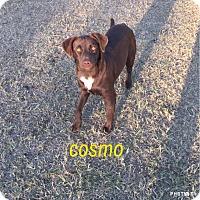 Adopt A Pet :: Cosmo - Snyder, TX