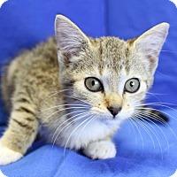 Adopt A Pet :: Maddie - Winston-Salem, NC