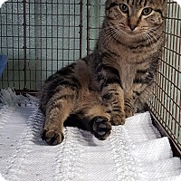 Adopt A Pet :: Prancer - Cody, WY