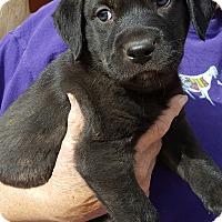 Adopt A Pet :: Pappy - Phoenix, AZ