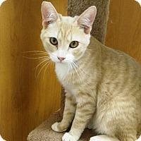 Adopt A Pet :: Joshua - Las Vegas, NV