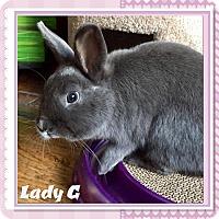Adopt A Pet :: Lady Godiva - Winnipeg, MB