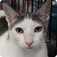 Adopt A Pet :: Finnegan - Santa Monica, CA