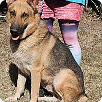 Adopt A Pet :: Baron - Hernando, MS