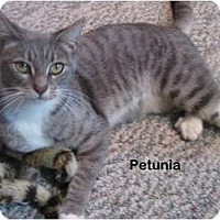 Adopt A Pet :: Petunia - Portland, OR