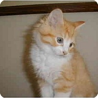 Adopt A Pet :: Dixon - Proctor, MN