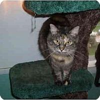 Adopt A Pet :: Rotini - Hamburg, NY