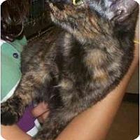 Adopt A Pet :: Helen - Richmond, VA