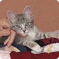 Adopt A Pet :: Spyros - Davis, CA
