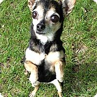 Adopt A Pet :: Tina - Osseo, MN