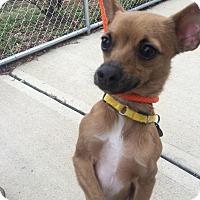 Adopt A Pet :: Wiley - Oak Ridge, NJ