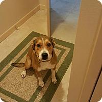 Adopt A Pet :: Zena - Guest - Dallas, TX