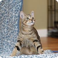 Adopt A Pet :: Delilah - Duncan, BC