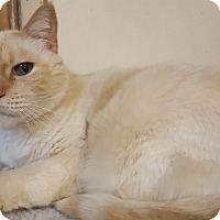 Adopt A Pet :: Buttercup - Riverside, CA