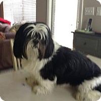 Adopt A Pet :: Seve - ADOPTION PENDING!! - Arlington, VA