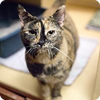 Adopt A Pet :: Momzy - Toronto, ON