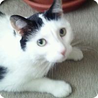 Adopt A Pet :: Pepper - Clarksville, TN