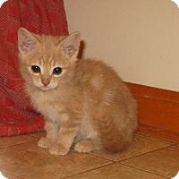 Adopt A Pet :: Buzz - Bedford, VA