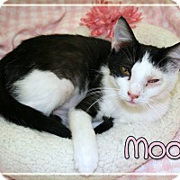 Adopt A Pet :: Moo - Bartlett, TN