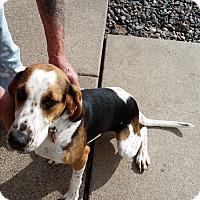 Adopt A Pet :: Dori - Chippewa Falls, WI