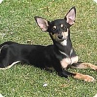 Adopt A Pet :: Peso - Lancaster, CA