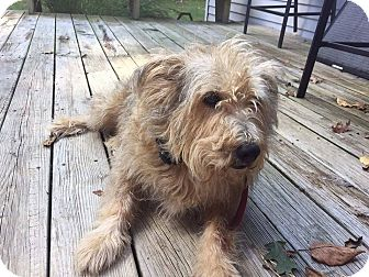 Terrier (Unknown Type, Medium) Mix Dog for adoption in Coeburn, Virginia - WHISKERS