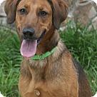 Adopt A Pet :: Mercy 4436