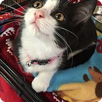 Adopt A Pet :: Rosie - Holland, MI