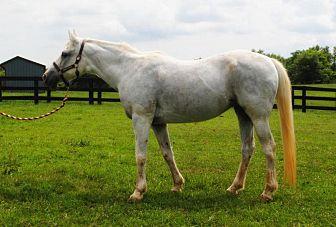 Arabian Mix for adoption in Lovettsville, Virginia - Ivy