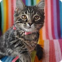 Adopt A Pet :: Amelia - Anderson, SC