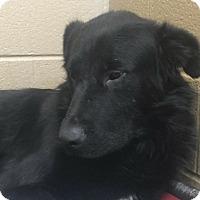 Adopt A Pet :: Jackson - Charlotte, NC