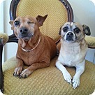 Adopt A Pet :: Ruby & Allie