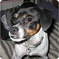 Adopt A Pet :: Pip - Topeka, KS