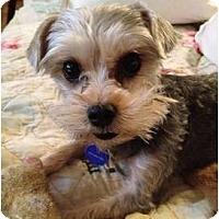 Adopt A Pet :: Ralphie - West Palm Beach, FL