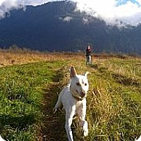 Adopt A Pet :: Dennis - Needs a forever home! - Vancouver, BC