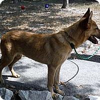 Adopt A Pet :: RADAR - SAN ANTONIO, TX