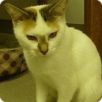Adopt A Pet :: Hannah Lynn - Hamburg, NY