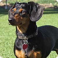 Adopt A Pet :: Miss Fletcher - Meridian, ID