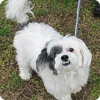 Adopt A Pet :: Susu - Lockhart, TX